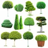 Collage of green trees and bushes isolated on white — Stock Photo