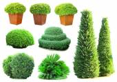Collage of green bushes isolated on white — Stock Photo