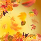 Vivid autumn leaves — Stock Photo