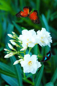 Beautiful flowers and butterfly in garden — Stock Photo