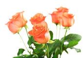 όμορφα τριαντάφυλλα — Φωτογραφία Αρχείου
