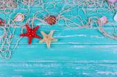 Decor of seashells close-up on blue wooden table — Stock Photo