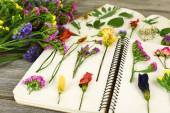 Composition with flowers and dry up plants on notebooks on table close up — Stock Photo