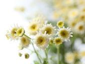 Beautiful wild flowers on light background — Stock Photo