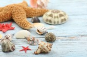 Seashells on wooden table, close-up — Stock Photo