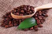 Wooden spoon of coffee beans on sacking background closeup — Stock Photo