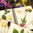 Composition with flowers and dry up plants on notebooks on table close up — Stock Photo #52532479