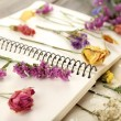 Composition with flowers and dry up plants on notebooks on table close up — Stock Photo #52532499