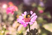 Beautiful flower with butterfly in garden — Stock Photo