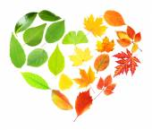 Green and yellow leaves in heart shape isolated on white — Stock Photo