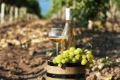Wooden barrel, grape and bottle of wine on grape plantation background — Stock Photo