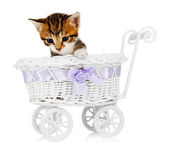 Cute little kitten in stroller isolated on white — Stock Photo