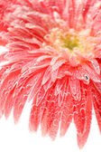 Beautiful flower in sparkling water, close-up — Stock Photo
