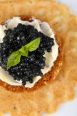 Black caviar with crispy bread closeup — Stock fotografie