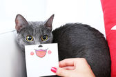 Grey cat on sofa closeup — Stock Photo