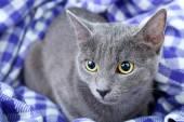 Mor paket portre üzerinde kedi — Stok fotoğraf