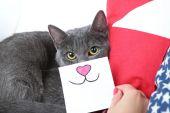 在沙发上特写只灰色的猫 — 图库照片