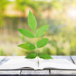 Open book with plant on table outdoors — Stock Photo #53021399