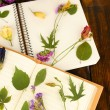 Composition with flowers and dry up plants on notebooks on table close up — Stock Photo #53026109
