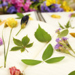 Composition with flowers and dry up plants on notebooks on table close up — Stock Photo #53026123