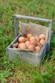 Eggs in wooden box — Foto de Stock