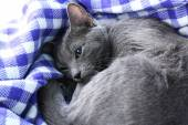 Cat on blanket — Stock Photo