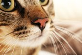 Cat's muzzle closeup — Stock Photo