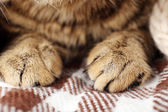 Grey cat's paws — Stock Photo