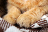 Red cat's paws — Stock Photo
