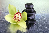 Orchid flower and spa stones — Foto Stock