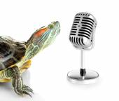 Red ear turtle with microphone isolated on white — Stock Photo
