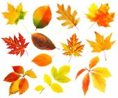 Autumn leaves collage isolated on white — Stock Photo