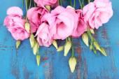 Eustoma flower — Stock Photo