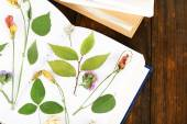 Dry up plants on notebook — Stock Photo