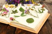 Dry up plants on notebook — Stockfoto