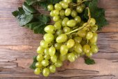 Bos van rijpe druif — Stockfoto