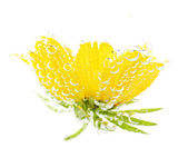 Flower in sparkling water — Stock Photo