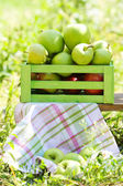 Äpfel im feld — Stockfoto