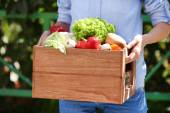 Vegetables in box — Stock Photo