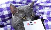 Cat on purple blanket — Stock Photo