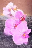 Tropikalne kwiaty orchidei — Zdjęcie stockowe