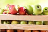 Juicy apples — Stock Photo