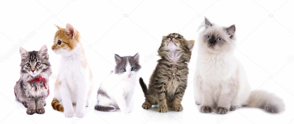 壁纸 动物 猫 猫咪 小猫 桌面 1024_433