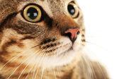 Cat's muzzle — Stock Photo