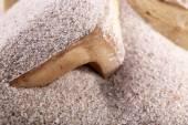 Bones in sand — Foto Stock