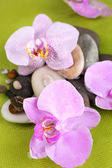Orchid flowers and stones — Stock Photo