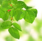 Beautiful green twig — Photo
