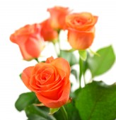 Bouquet of beautiful roses isolated on white — Stock Photo
