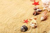 Muszle na piasku, szczelnie-do góry — Zdjęcie stockowe