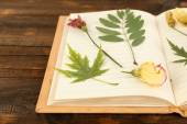 Dry up plants on notebook — Stockfoto